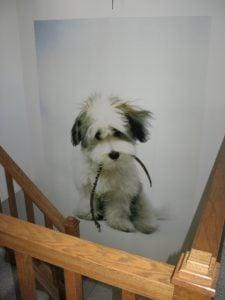 For a wall mural you'll love forever, use your own photos of friends and family and the cutest dog ever.